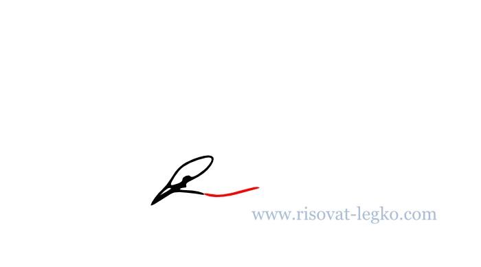 04.Как нарисовать поэтапно карандашом птицу новичку