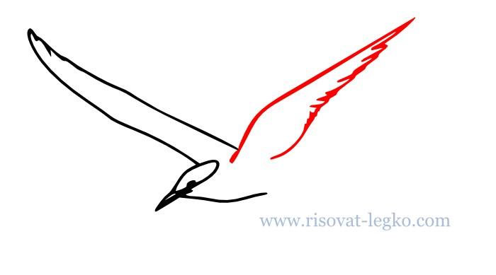 06.Как нарисовать поэтапно карандашом птицу новичку
