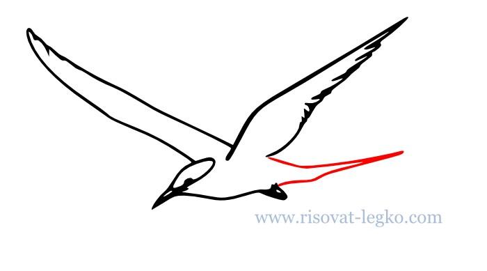 07.Как нарисовать поэтапно карандашом птицу новичку