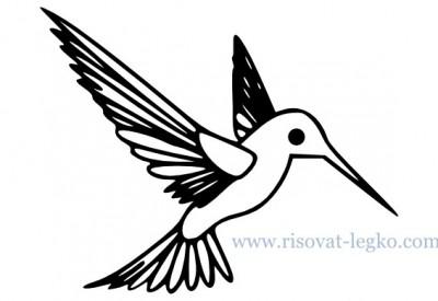 01.Как нарисовать поэтапно птицу для начинающих