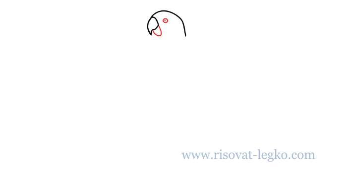 03.Как нарисовать попугая поэтапно для начинающих