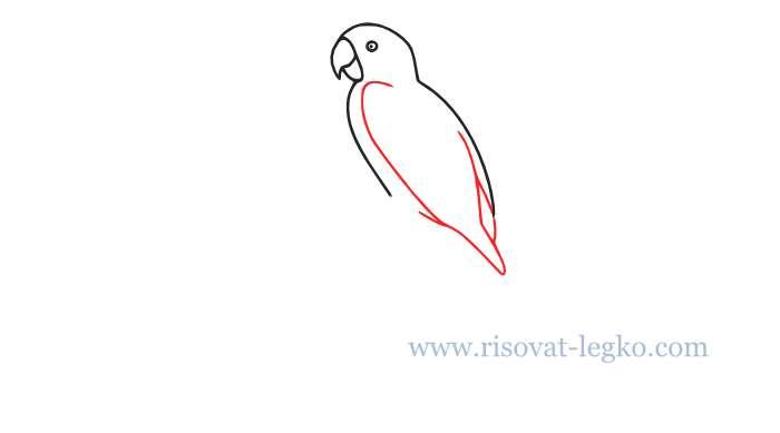 05.Как нарисовать попугая поэтапно для начинающих
