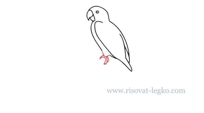 06.Как нарисовать попугая поэтапно для начинающих
