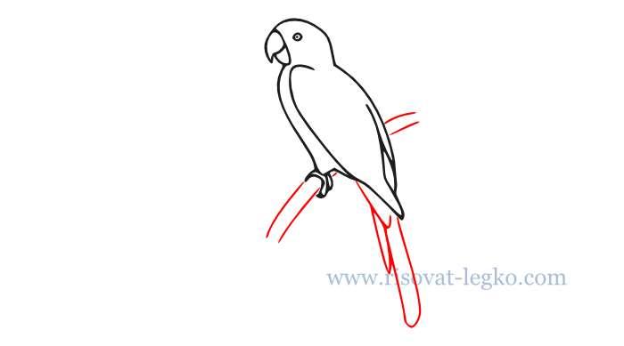 07.Как нарисовать попугая поэтапно для начинающих