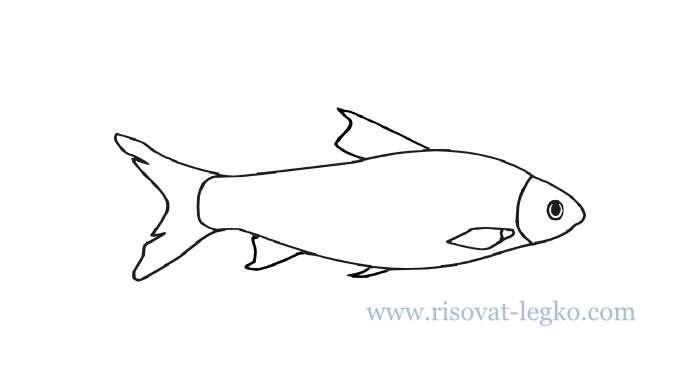 01.Как нарисовать рыбу поэтапно карандашом новичку