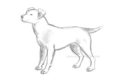 01.Как нарисовать собаку карандашом поэтапно