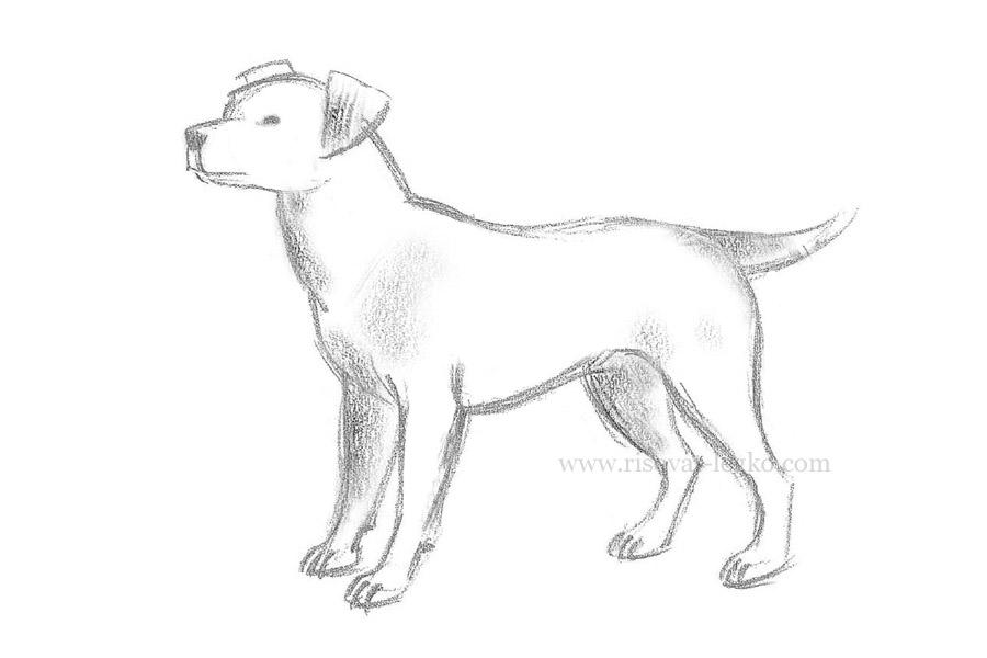 Как рисовать собак