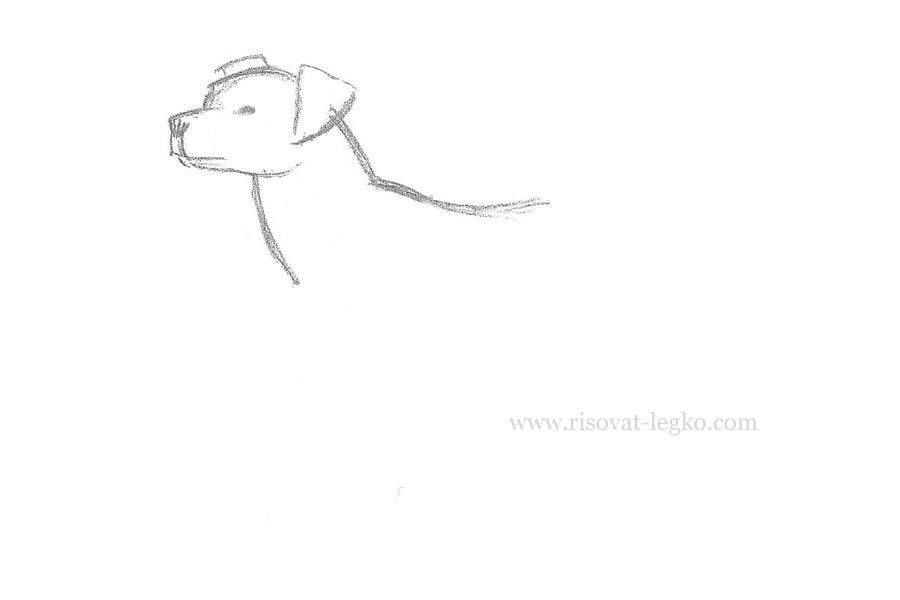 04.Как нарисовать собаку карандашом поэтапно