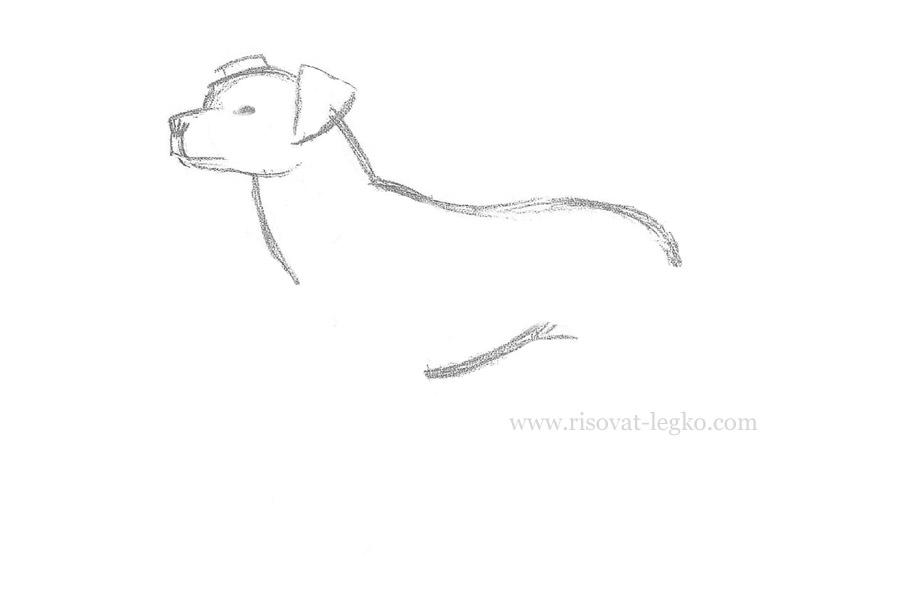 05.Как нарисовать собаку карандашом поэтапно