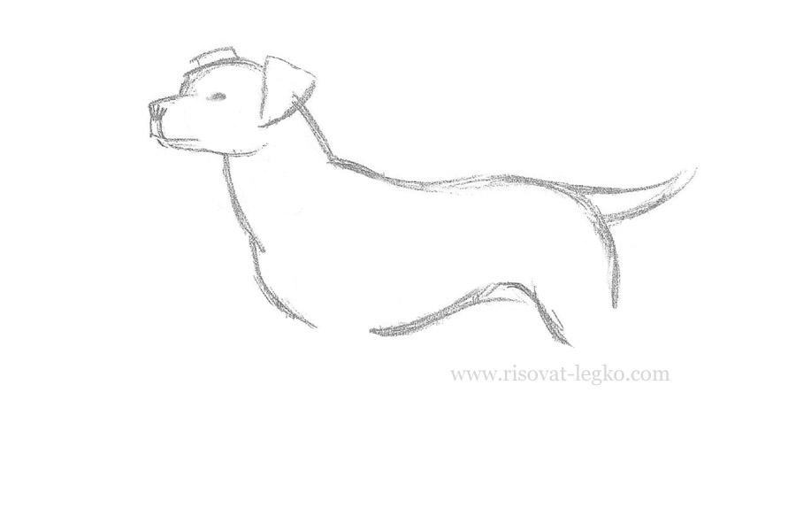 06.Как нарисовать собаку карандашом поэтапно