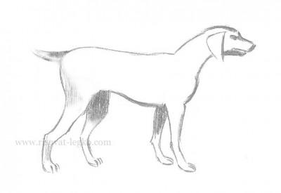 01.Как нарисовать собаку поэтапно для начинающих