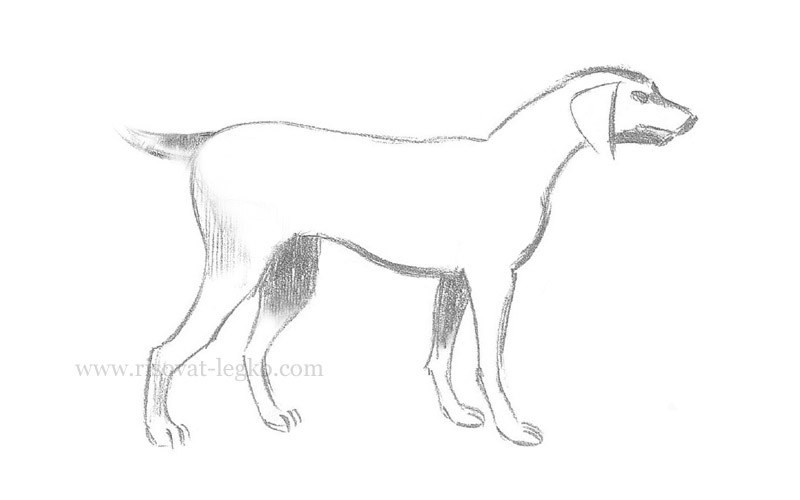 Как нарисовать собаку картинки для начинающих 15