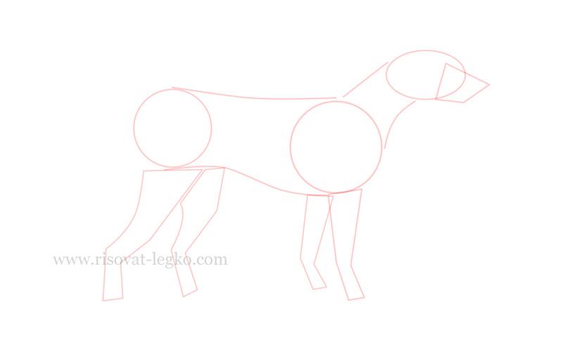 02.Как нарисовать собаку поэтапно для начинающих