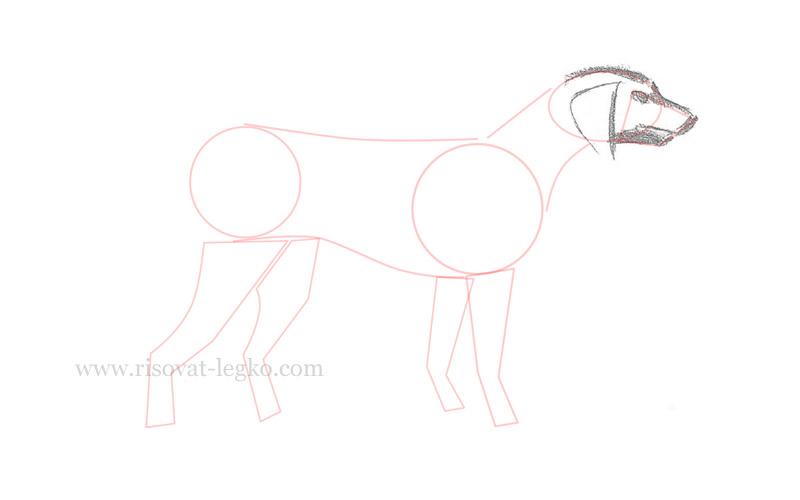 03.Как нарисовать собаку поэтапно для начинающих