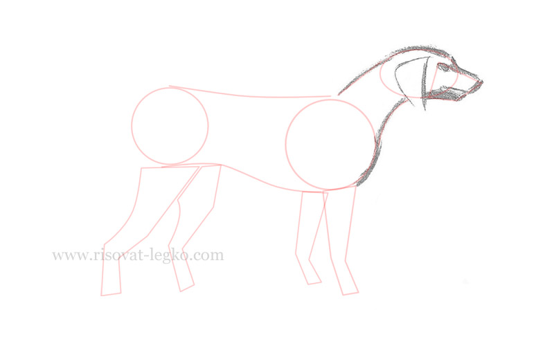 04.Как нарисовать собаку поэтапно для начинающих