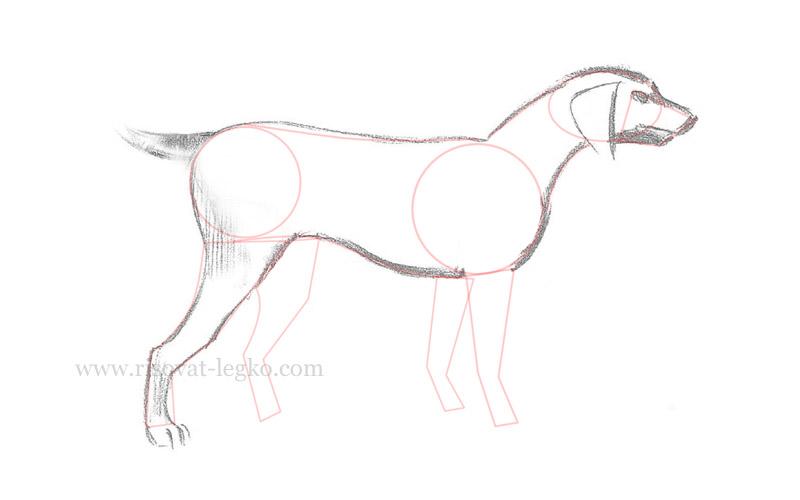 06.Как нарисовать собаку поэтапно для начинающих