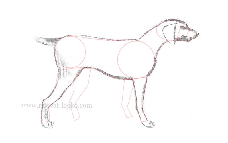 07.Как нарисовать собаку поэтапно для начинающих