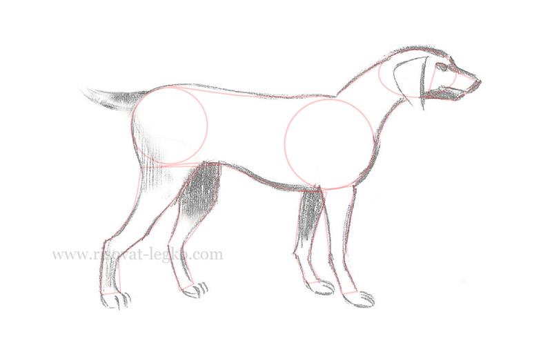 08.Как нарисовать собаку поэтапно для начинающих