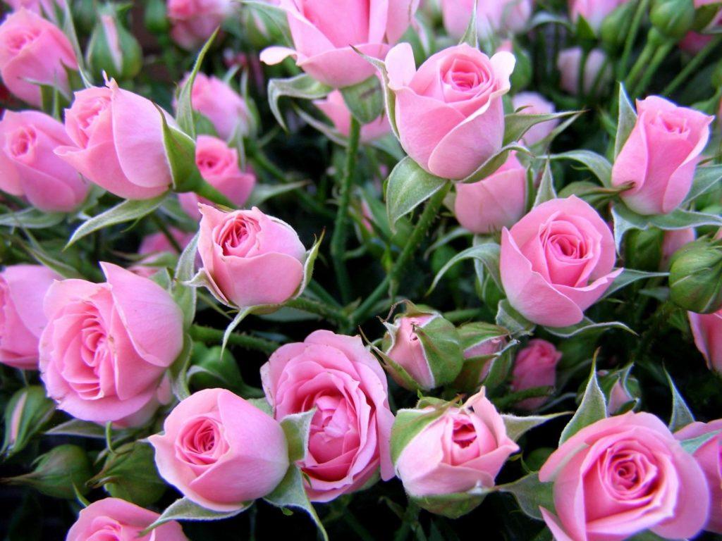 Фото на день рождения. цветы